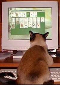 Computer Gaming Cat