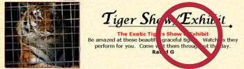 Medieval Fair Tiger Exhibit Exploits Big Cats