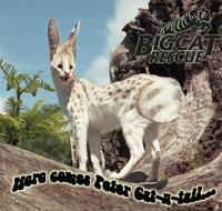 Peter Cat N Tail
