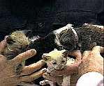 Scarlett's kittens