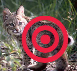 Bobcat Hunt