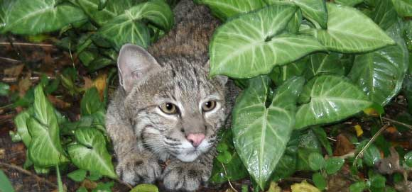 Can Cats Eat Ferns