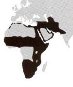 Caracal Cat Locations