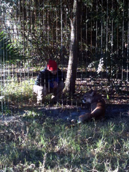 Freddy cougar and Jamie at Big Cat Rescue