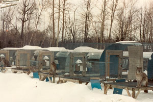 Canadian Fur Farm (not MN)