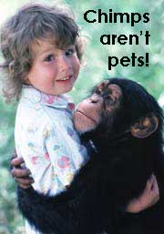 Chimp hugging baby