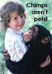 Chimp hugging baby