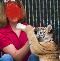 Woman Feeding Baby Tiger for Photo Op