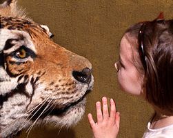 Children Killed and Mauled by Big Cats | Big Cat Rescue