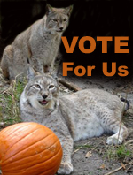 Vote For Big Cat Rescue