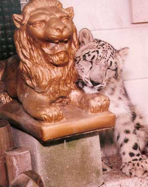 Snow Leopard on Lion