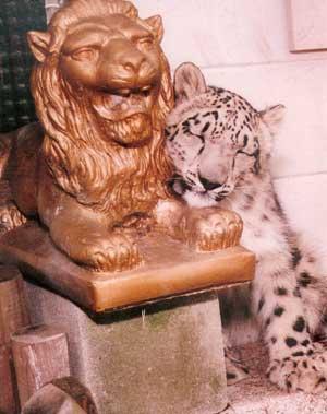 Snow Leopard on Lion
