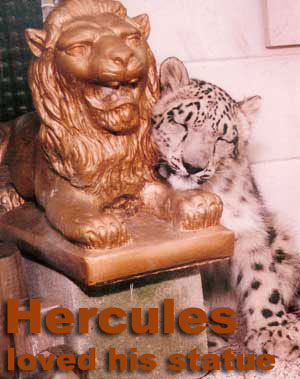 Hercules the Snow Leopard loved his statue