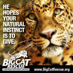 Leopard Photo Natural Instincts