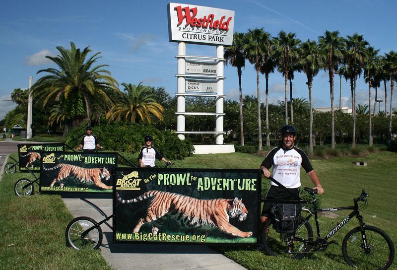 Tigers on Bikes