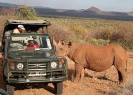 Lewa Safari