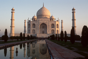 Taj Mahal Tigers in India
