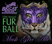 Fur Ball Tampa FL