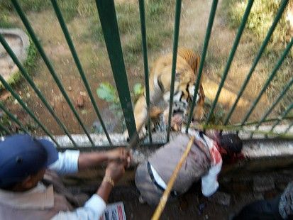 Man Eaten By Lion In Front Of Family