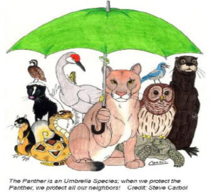 Florida Panther Umbrella Species