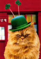 Irish Cat
