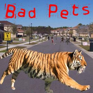 Tiger Loose