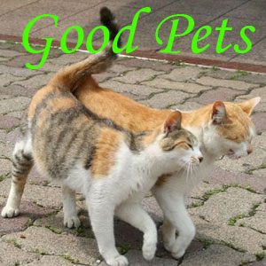 Good Pets vs Bad Pets