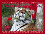 Valentine's Day Cards to Benefit Tigers