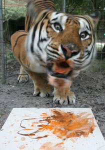 Alex the Tiger LOVES to Paint