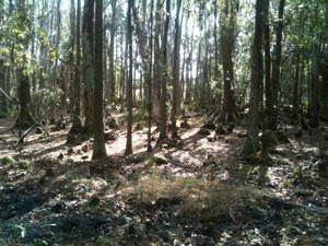 10 acres trees