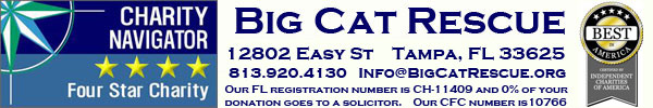 Big Cat Rescue is a 4 Star Charity and Awarded Best in America