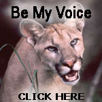 Florida Panther facts, Florida Panther photos, Florida Panther ...