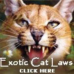 Exotic Cat Laws