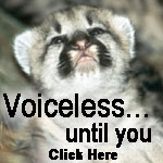 Speak up for big cats