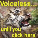 TigerCubPhoto