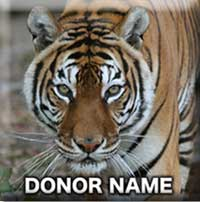 Support Big Cat Rescue Signs