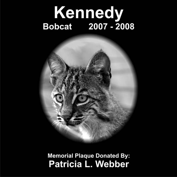 Kennedy Bobcat