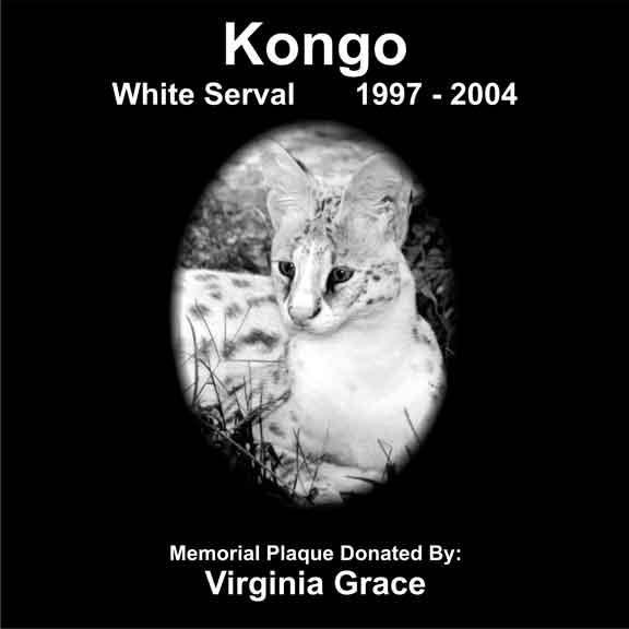 Kongo White Serval
