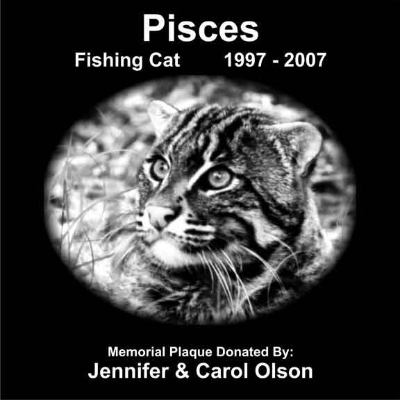 Pisces Fishing Cat