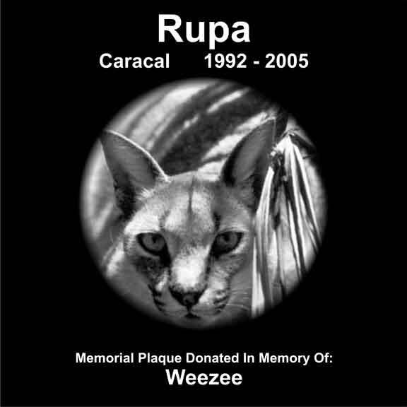 Rupa Caracal