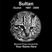 Sultan the Ocelot