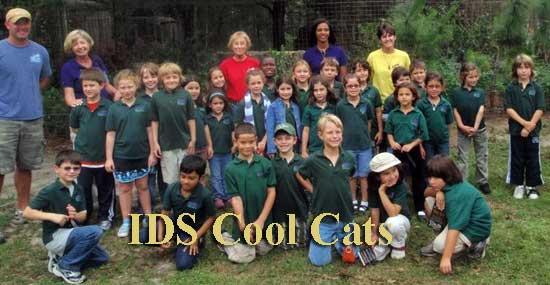 IDS Cool Cats