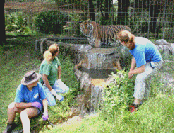 Summer Camp Adults Big Cat Rescue