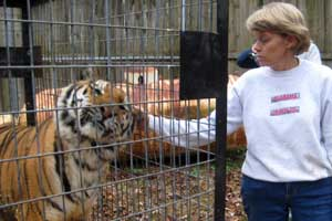Rita says Goodbye to Cookie the tigress
