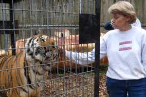 Rita says Goodbye to Cookie the tigress