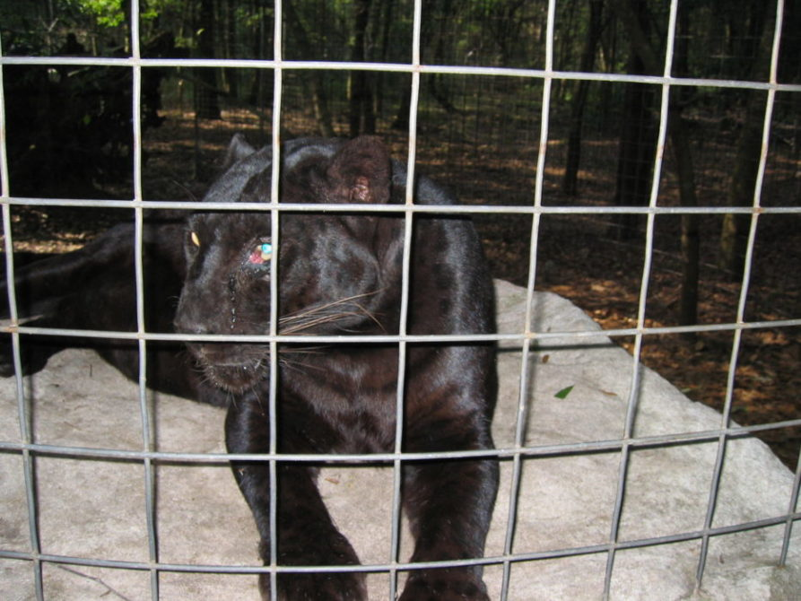 Animal Protection Groups and Sanctuaries Challenge Zoning