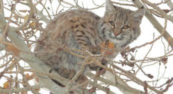 FAQs Archives | Big Cat Rescue