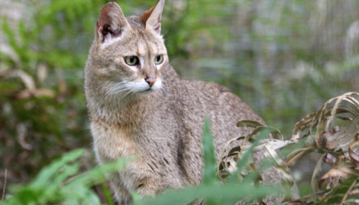 Crystal Jungle Cat