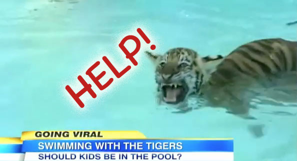 Swim With Tiger Cubs is Abuse
