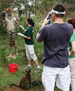 Operant Conditioning is training the tiger to do thing we need for medical purposes. This way our vet can inspect the paws, belly, etc.